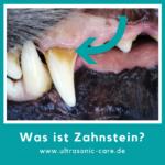 Wie sieht Zahnstein beim Hund aus?